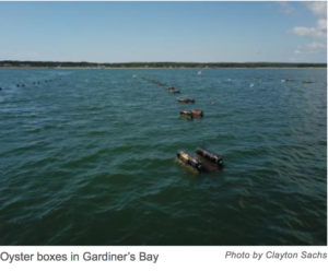 Floating Oyster Installation in Gardiner's Bay