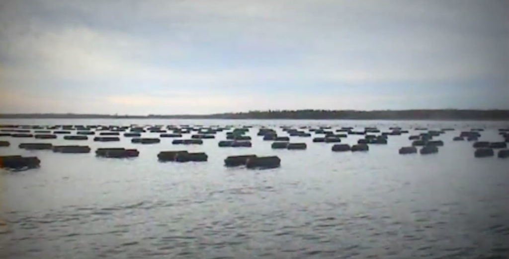 floating oyster cages